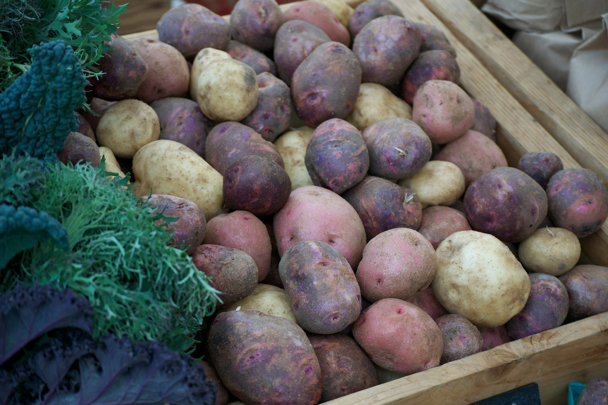 The Portland Farmers Market near PSU will remain open through the winter for the first time this year, offering shoppers an array of locally-farmed cruciferous and root vegetables.