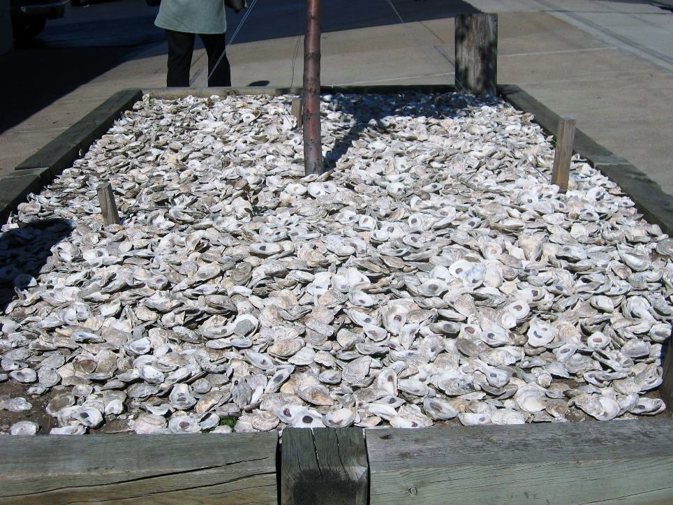 The planter out front is topped off with oyster shells. Probably not a common sight in Nebraska.
