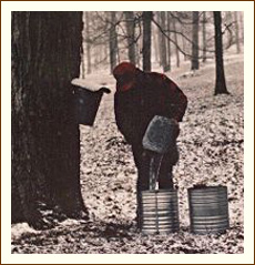 Collecting maple sap in the days before plastic tubing