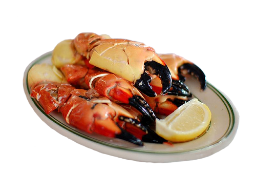 Stone crab claws are certainly the most beautiful, and likely the most spendy, shellfish around.