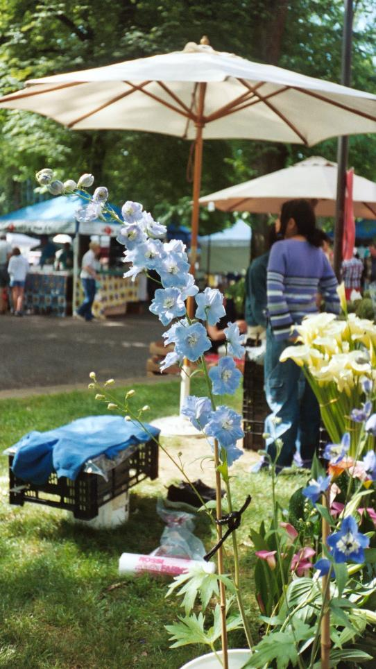 The market is also a great place to buy all sorts of plants and flowers, at great prices.