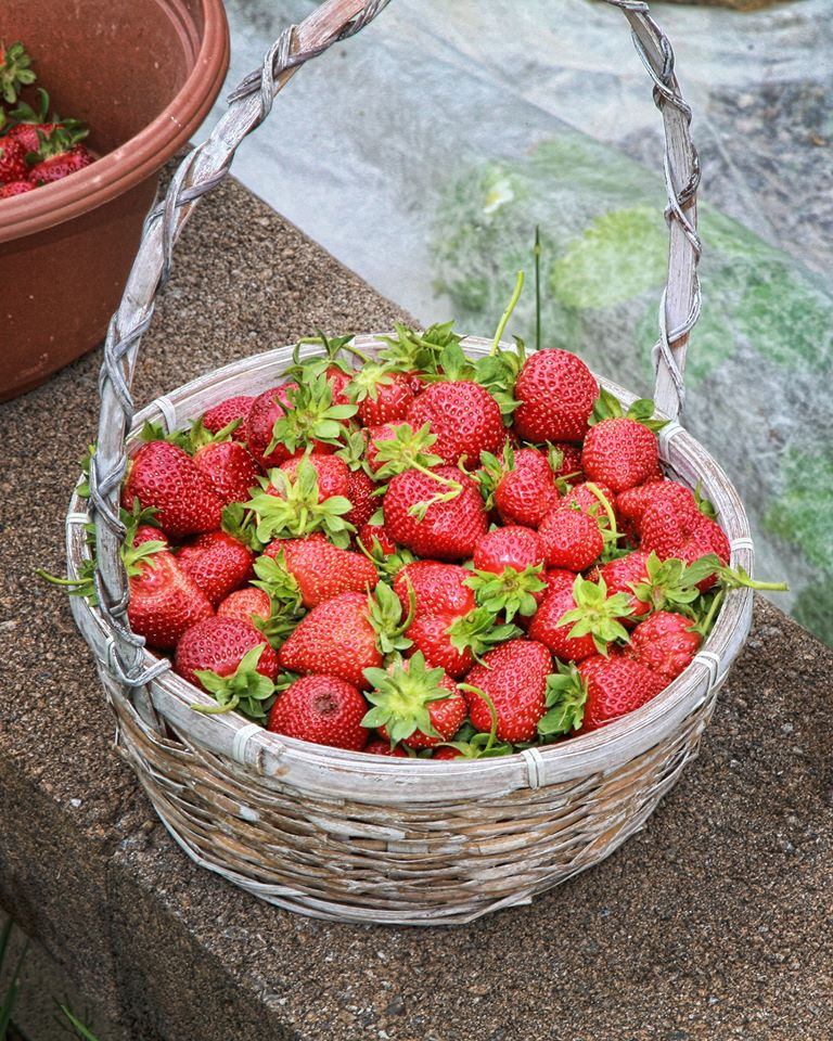 An award-winning strawberry basket