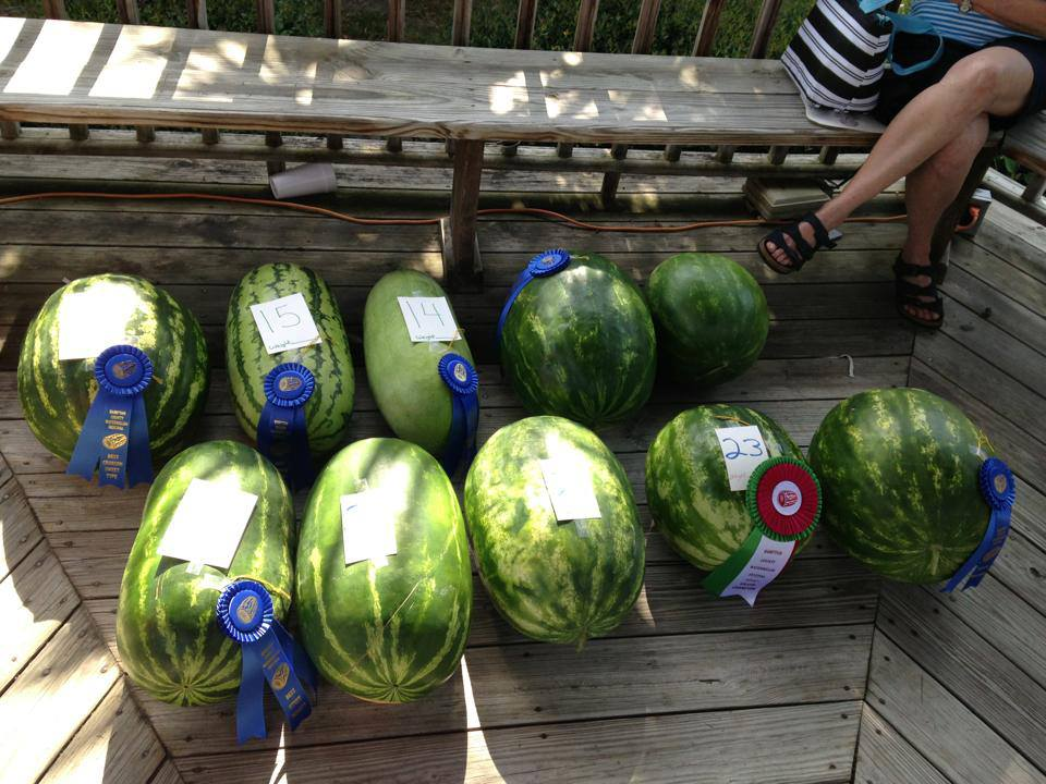 Watermelons, Hampton County Watermelon Festival, Hampton, SC
