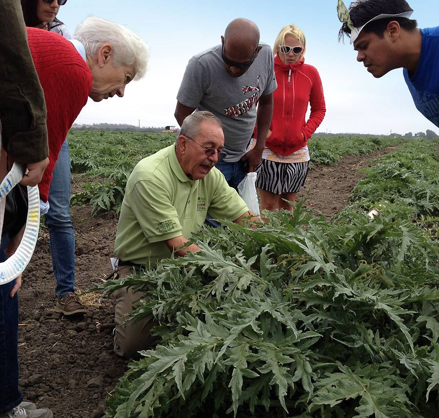 Visit an artichoke ranch during one of the five hour-and-a-half field tours held each day.